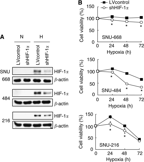Effect of HIF-1α suppression induced by lentivirus-del