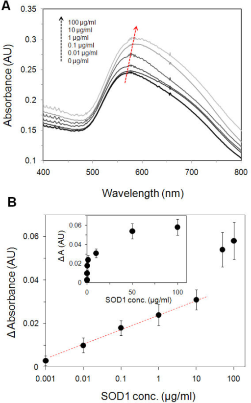 (A) Representative absorption spectra of SOD1 concentration-dependent response. (B) Changes in the maximum absorbance peak as a function of SOD1 concentration.