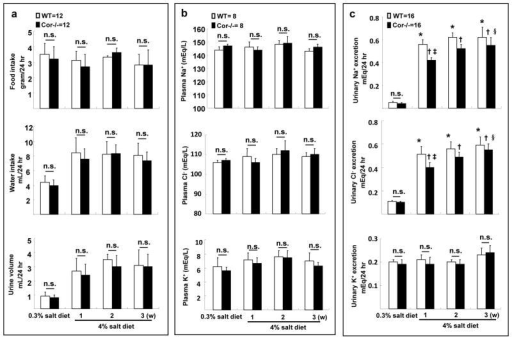 Metabolic studies and reduced sodium excretion in Cor−/− miceFood and water intake, urine volume (a), plasma eletrolytes (b) and urinary Na+, Cl− and K+ excretion (c) were measured in WT and Cor−/− mice on 0.3% and 4% NaCl diets. n.s., not statistically significant; *p<0.01 vs. WT on 0.3% NaCl diet; †p<0.01 vs. Cor−/− on 0.3% NaCl diet; ‡p<0.01 vs. WT on 4% NaCl diet 1 week; §p<0.05 vs. Cor−/− on 4% NaCl diet 1 week by two-way ANOVA; n=8–16 per group.