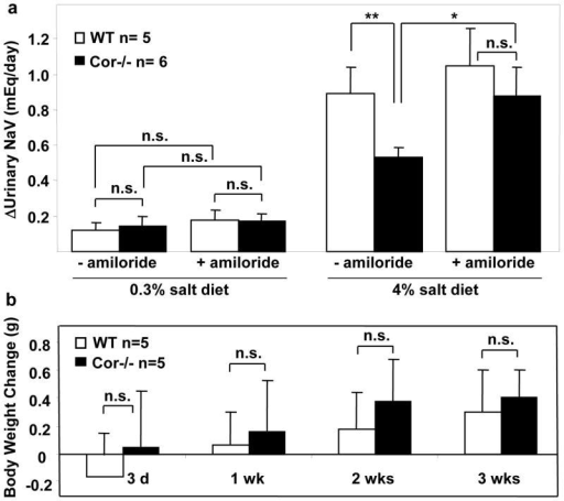 Amiloride promoted sodium excretion and reduced body weight gain in Cor−/− mice on high salt dietWT and Cor−/− mice on 0.3% or 4% NaCl diet were treated with vehicle (−amiloride) or amiloride (3 mg/kg/day, i.p.). Changes in urinary sodium excretion in one week (a) and body weight up to 3 weeks (b) were shown. n=5–6 per group. *p<0.05; **p<0.01 by two-way ANOVA; n.s., not statistically significant.