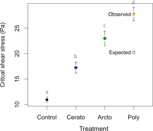 Impacts of monocultures and polycultures of caddisflies on critical shear stress.Values are means ±1 SEM for N = 8. Lowercase letters indicate significant differences between treatments.