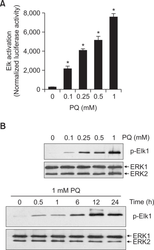 The effect of paraquat on activation of ERK1/2 MAPKs in NIH3T3 cells. (A) Cells were cotransfected with GAL4-Elk/firefly luciferase vector and control renilla luciferase vector (pRL-Luc). Different dose of paraquat were then treated for 12 h. The cells were lysed, and luciferase activity was measured. Firefly luciferase reading was normalized to that or the control renilla luciferase. Results are shown as means ± S.D. (n=3). *<0.05. (B) Upper panel, cells were treated with the different dose of paraquat for 12 h. Lower panel, cells were treated with 1 mM paraquat for indicated time. Activation of ERK1/2 was determined by an immune complex kinase assay using Elk-1 fusion protein as substrate. ERK1/2-induced phosphorylation of Elk-1 was measures by immunoblotting with phosphor-Elk-1(Ser383) antibody. The ERK1/2 protein levels were shown using immunoblotting of ERK1/2 as control of immunocomplex.