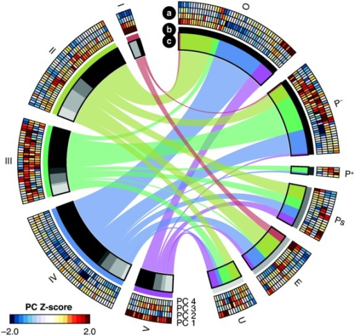 Relationships between clusters and ILAR subtypes. The circular plot depicts relationships and patient compositions of each new cluster (left) and ILAR subtype (right). Individual patient scores on each of the 4 principal components (PCs) are depicted in the outermost layer (a), with the heatmap corresponding to the scores for each PC shown at lower left. Each cluster and ILAR subtype is depicted by a color or shade of gray, respectively, in the second layer (b). The ILAR subtype composition (shades of gray) of each cluster and the cluster composition (colors) of each ILAR subtype are depicted in the third layer (c). Colored ribbons link clusters and ILAR subtypes. Numbers of patients are proportional to the width of the ribbons. Thicker ribbons indicate more patients shared between clusters and ILAR subtypes. See Figure 2 for other definitions.