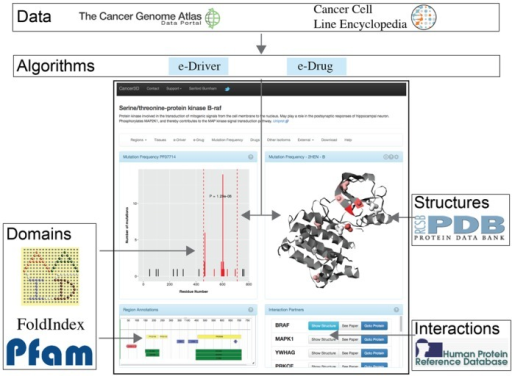 Database sources, content and main view. The database allows users to simultaneously access two types of cancer data: mutation frequency (from TCGA) and pharmacogenomic profiles (from CCLE). When a user queries the database with a protein name, Cancer3D retrieves these data and analyzes them using e-Driver and e-Drug, respectively. The user can also view where the mutations are located in different structures from PDB and navigate through the different protein regions and structures using the protein viewer. Finally, Cancer3D also provides information on which proteins are interacting with the query according to Human Protein Reference Database (HPRD), allowing users to either go to references describing the interaction or to query Cancer3D with those proteins.