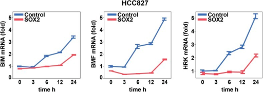 Effect of SOX2 overexpression on apoptotic regulators.Induction of BIM, BMF, and HRK following erlotinib treatment of HCC827cells was assessed as in Figure6A.DOI:http://dx.doi.org/10.7554/eLife.06132.035