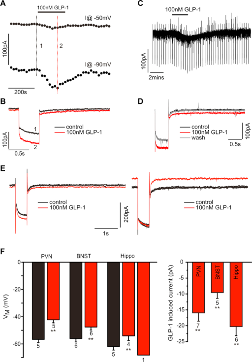GLP-1 elicits electrical responses in GLP-1R-Cre positive cells in various brain regions. A, B. Voltage-clamp recording from an RFP-positive PVN neuron. Bath application of 100 nM GLP-1 elicited a small inward current at a holding potential of −50 mV accompanied by an increase in whole-cell conductance. These effects reversed upon washout of GLP-1 from the bath solution. C, D. Similarly, in a BNST neuron bath application of 100 nM GLP-1 elicits an inward current accompanied by an increase in conductance. E. Voltage clamp recordings in RFP-positive hippocampal neurons revealed that GLP-1 either elicits an inward current (left panel) as in PVN and BNST, or an outward current. F. Mean data from current clamp recordings (left panel) demonstrating that GLP-1 causes a 10–15 mV depolarisation in most neurons tested, and a hyperpolarisation in individual hippocampal cells. Mean data from voltage clamp recordings in the right panel demonstrate the inward current of 10–20 pA amplitude elicited by 100 nM GLP-1 underlying the depolarisation in current clamp. n-numbers are given below the bars. **: p < 0.01.