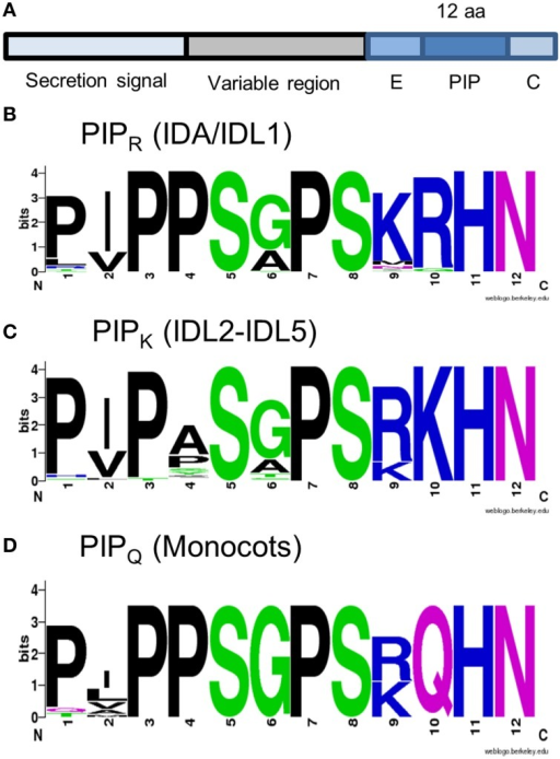 IDA and IDL peptides. (A) Structure of IDA and IDL prepropeptides. (B–D) Peptide consensus sequences as indicated. The alignment used for the construction of the peptide logos is available as Supplementary Data Sheet 3.
