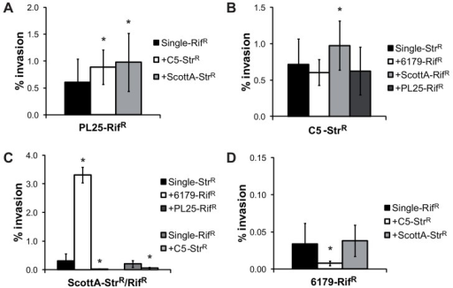 Effect of strain competition on the invasion efficiency of L. monocytogenes strains.Invasion efficiency (%) of L. monocytogenes strains (A) PL25-RifR, (B) C5-StrR, (C) ScottA-StrR/RifR and (D) 6179-RifR grown alone (single) or in the presence of a second L. monocytogenes strain (1 day, 10°C, TSB-Y) was determined using Caco2 cells. Cells were infected for 1h with bacteria (multiplicity of infection of 25), and incubated for 45min (invasion) with gentamycin. Data, represented as % of invasion, are mean values ± standard deviation of three biological replicates performed in triplicate. *indicates significant difference of the mixed culture compared to the corresponding single culture (P<0.05). p-values are shown in S3 Table.