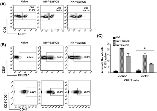 NK cell depletion in EM/IOE-infected mice impairs expansion of effector memory CD8+ T cells.Splenocytes harvested on day 7 after IOE infection from NK-/-EM/IOE and NK+/+EM/IOE-mice were stimulated in vitro with IOE antigens and the frequency of antigen-specific activated/effector memory T cells were determined by flow cytometry. Naïve cells were stimulated in vitro with IOE antigens. Gating on splenocytes and T cells was shown in (A). The spleens of NK-/-EM/IOE-mice contained lower percentages (B) and absolute number (C) of CD44+ CD8+ T cells compared to that detected in the spleens of NK+/+EM/IOE-infected mice. No significant difference in the frequency of CD62L+ CD8+ T cells between NK-/-EM/IOE-mice and NK+/+EM/IOE-mice. Data are presented as the means ± SD of four mice per group from two independent experiments. ** indicates P < 0.01.