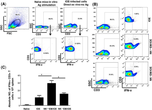 Decreased percentage of IFN-γ producing CD3+ T cells in NK-/-EM/IOE-mice.Splenocytes were harvested from the indicated mice groups on day 7 after IOE infection, and were stimulated in vitro with E. muris Ags or left unstimulated. Lymphocytes were gated based on the forward and side scatter, and then cells were gated on CD3. CD3+ T cells were further analyzed for intracellular IFN-γ staining as shown in the gating strategy (A). Controls shown in dot plots includes naïve splenocytes stimulated in vitro with E. muris Ags and IFN-γ production by unstimulated splenocytes from IOE-infected mice. (B) Dot plots shows the percentage of gated CD3+ T cells and the percentage of IFN-γ+ CD3+ T cell subset in indicated mice groups following in vitro stimulation with E. muris Ags. (C) Data show the differences in the absolute number of IFN-γ+ CD3+ T cells in the spleen of indicated mice groups. Data shown are from three mice/groups with similar results in three independent experiments (n = 9 mice/group).