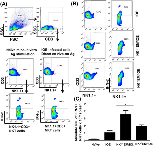 Decreased percentage of IFN-γ producing NKT cells in NK-/-EM/IOE-mice.Splenocytes were harvested from the indicated mice groups on day 7 after IOE infection, and were stimulated in vitro with E. muris Ags or left unstimulated. (A) dot plots show the gating strategy where lymphocytes were first gated based on the forward and side scatter, and then cells were gated on CD3. CD3+ T cells were further gated on NK1.1.+ cells (NKT cells). The NKT cells were further analyzed for intracellular IFN-γ staining. Controls shown in the dot plots includes naïve splenocytes stimulated in vitro with E. muris Ags and IFN-γ production by unstimulated splenocytes from IOE-infected mice. (B) Dot plots shows the percentage of gated CD3+ T cells and the percentage of IFN-γ+ producing NKT cells in indicated mice groups following in vitro stimulation with E. muris Ags. (C) Data show the differences in the absolute number of IFN-γ+ producing NKT cells in the spleens of indicated mice groups. Data shown are from three mice/groups with similar results in three independent experiments (n = 9 mice/group). * indicates P <0.05.