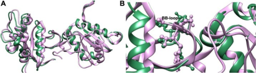 Superimposed structures of the docked MyD88 dimers showing complete overlap of the docked complexes.Notes: (A) The ClusPro docked complex is depicted in pink ribbons, while the GRAMM-X docked complex is shown in green ribbons. (B) Zoomed interfaces of the complexes showing the position of BB-loop residues in ball and stick.Abbreviation: GRAMM-X, Global Range Molecular Matching.