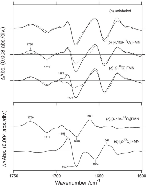 (a) Difference FTIR spectra of native neo1-LOV2 (dotted lines) and neo-LOV2 reconstituted with the FMN and apoprotein (solid lines) in the 1800–950 cm−1 region at 295K. (b and c) Difference FTIR spectra of neo1-LOV2 reconstituted with unlabeled FMN (solid lines), [4,10a-13C2]FMN (dotted line in b) and [2-13C]FMN (dotted line in c). (d and e) Double-difference spectra of those in Figure 3b and c, where the labeled spectra (dotted lines) are subtracted from the unlabeled spectra (solid lines). This figure is modified from Ref 51.