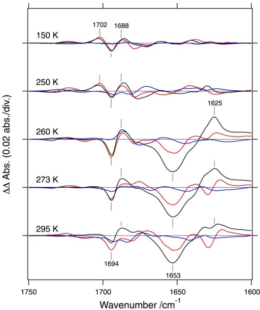 Double difference spectra between the LOV2-Jα and LOV2 core in the 1750–1600 cm−1 region. Spectra of phot1 (black lines), phot2 (red lines), and neo1 (blue lines) are shown at 150, 250, 260, 273, and 295 K. This figure is modified from Ref 53.