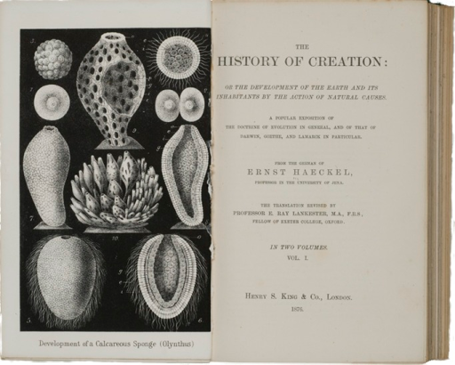 <p>Image of title page of The history of creation or the development of the earth and its inhabitants by the actions of natural causes / from the German of Ernst Haeckel. London : Henry S. King &amp; Co., 1876. Illustration on facing page: Development of Calcareous sponge (Olynthus).</p>