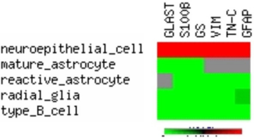 Expression profiles of glial marker proteins in glial cell populations. Pseudo-clustering of data from [9, 36]. Red = not expressed, lightgreen = expressed, darkgreen = expessed in some species, grey = no data available or ambiguous data. GLAST = L-glutamate/L-aspartate transporter, GS = glutamine synthase, VIM = vimentin, TN-C = tenascin-C, GFAP = glial fibrillary acidic protein.