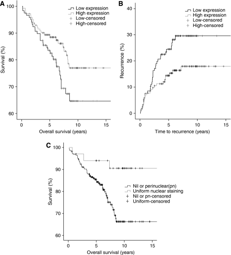 Kaplan–Meier survival curves show (A) overall survival difference between ER+ patients with high (above the median value) and low expression of activated nuclear c-Src (P=0.047); (B) 1−survival curve showing disease recurrence in ER+ patients with high and low expression of activated nuclear c-Src (P=0.02) and (C) overall survival differences between activated c-Src depending on the pattern of nuclear staining. Uniform nuclear staining was significantly associated with improved survival compared with no nuclear staining or only perinuclear (P=0.0153).