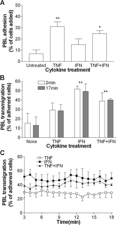 Effects of different cytokine treatments on lymphocyte recruitment to EC cultured in multiwell plates. HUVEC were stimulated with 100 U/ml TNF alone, 10 ng/ml IFN alone, or both for 24 h. Lymphocytes were allowed to settle for 5 min, nonadherent cells were washed off, and lymphocyte adhesion and transmigration were analyzed by phase-contrast microscopy. (A) Effect of cytokines on lymphocyte adhesion measured at 2 min after wash-off. (B) Effect of cytokines on lymphocyte transmigration through HUVEC at 2 min and 17 min after wash-off. (C) Time courses of lymphocyte transendothelial migration for different cytokines. Data are mean ± sem from four independent experiments. (A and B) ANOVA showed a significant effect of cytokine treatment on lymphocyte adhesion and transmigration; P < 0.01; *, P < 0.05; **, P < 0.01, compared with untreated by Dunnett test.