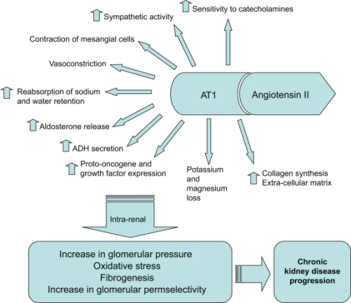 Effects of angiotensin II on the AT1 receptor.