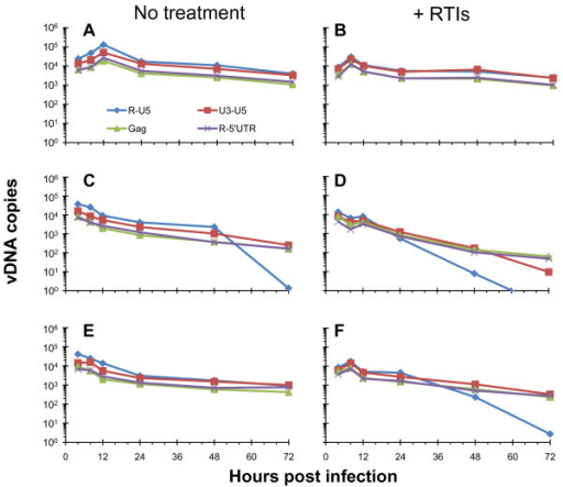 NC mutant reverse transcription kinetics in cells are altered when premature reverse transcription is blocked. CD4+ HeLa cells were infected with virus prepared in the absence or presence of RTIs that were subsequently removed using PEG-precipitation (Figure 1, left). These charts display the profile of reverse transcripts over a 72 h time course of infection. Panels A, C, and E show infections from viruses (WT, NCH23C, and NCH44C, respectively) not treated with RTIs, and panels B, D, and F show infections from viruses (WT, NCH23C, and NCH44C, respectively) where premature reverse transcription was blocked via RTI treatment. Prior to the infection, all of the virus samples were normalized for RT activity so that equal amounts were used to infect each set of cells. These results are from a representative experiment. The vDNA species measured were normalized for cell equivalents using CCR5 and are indicated at the bottom of panel A. Schematics of the pertinent vDNA target sites are shown at the bottom of Figure 3.