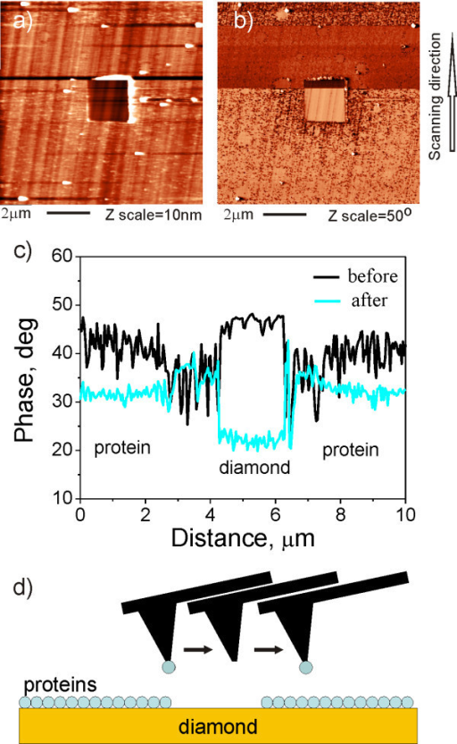 Influence of tip changes on AFM topography and phase. AFM image of FBS layer on MCD surface in air observed by Multi75Al (Budget Sensors) cantilever: (a) topography, (b) phase image. (c) The raw phase data showing that contrast between FBS and diamond changed sign during the measurement. (d) The model represents AFM cantilever and protein layer with square opening on diamond surface after the tip has captured a protein from FBS layer. The slow scan direction was from bottom to top of the images.
