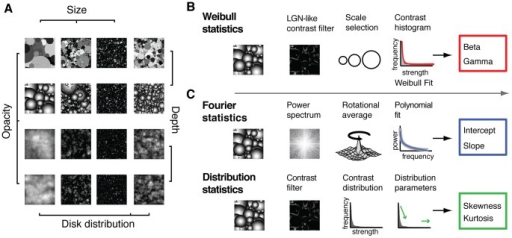 Example stimuli and computation of contrast statistics.(A), Example images of each of the 16 categories used in the behavioral and EEG experiment. Images contained randomly placed disks that differed in distribution, opacity, depth and size. Each category contained 16 unique images. (B), Consecutive steps in computing various contrast statistics. Weibull statistics are computed by filtering the image with a range of contrast filters with LGN-like scale- and gain properties, after which for each image location, the filter containing the minimal reliable response is selected. Responses of all selected filters are summed in a histogram to which the Weibull function is fitted, from which the beta and gamma parameters are derived using maximum likelihood estimation. (C), Power spectra parameters (top row) are extracted by taking the Fourier transform, averaging across directions, and computing the intercept and slope values of a line fitted to the average power spectrum. Higher-order properties of the contrast distribution (bottom row) are computed by filtering with a single-scale center-surround filter, after which skewness and kurtosis of the resulting contrast distribution are derived. Weibull statistics (multiscale local contrast) presumably contain information present in Fourier parameters (scale statistics) as well as local contrast distribution parameters (distribution statistics).