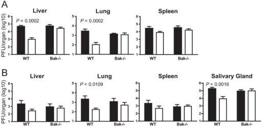 m41.1 inhibits Bak in vivo.WT B6 or B6.Bak−/− mice were depleted of NK cells prior to infection with WT MCMV (filled columns) or the Δm41.1 mutant (open columns). Viral load in the indicated organs was quantified by plaque assay on (A) day 4 pi, or (B) day 8 pi. Mean ± S.D. of 6–8 mice per group is plotted.