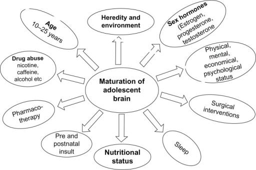 Factors influencing adolescent brain maturation.Notes