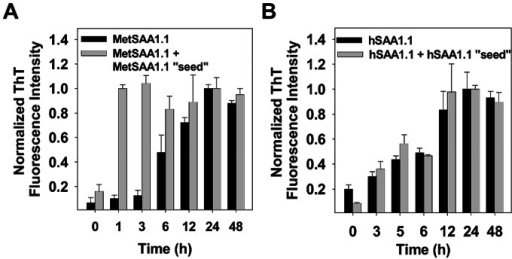 "Characterization of ""seeding"" properties of MetSAA1.1 and hSAA1.1 by ThT fluorescence assay.(A) ThT fluorescence intensity profile for freshly refolded MetSAA1.1 only (black bars) and MetSAA1.1+ MetSAA1.1 ""seed"" (gray bars); (B) ThT fluorescence intensity profile for freshly refolded hSAA1.1 only (black bars) and hSAA1.1+ hSAA1.1 ""seed"" (gray bars). The concentration of protein was 20 µM. ThT fluorescence intensities were recorded by incubating the samples at 37°C."