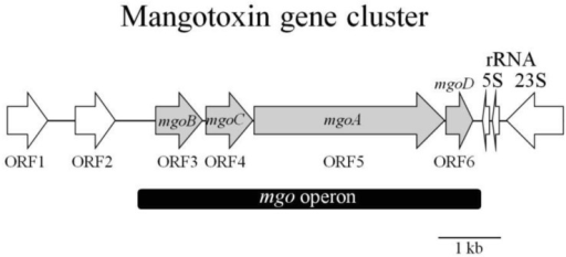 Structural organization of the mangotoxin gene cluster in the genomic clone pCG2-6. The different CDs are represented by arrows indicating the direction of transcription. The grey arrows indicate the mgo operon (black band) genes. Other genes identified by researchers are also shown in the figure. Figure partially adapted from Arrebola et al. [62].