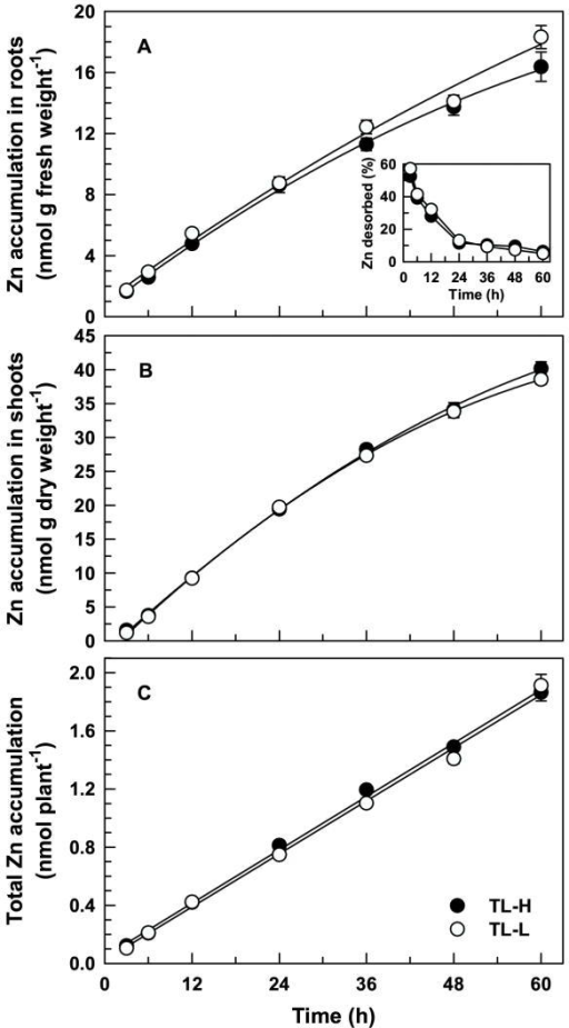 Long-term 65Zn accumulation in durum wheat seedlings. Time-course of 65Zn accumulation in intact roots (A), 65Zn translocation to shoots (B), and 65Zn accumulation per plant (C) of high (TL-H) and low (TL-L) Cd-accumulating isolines of durum wheat. Roots of 6-d old seedlings were exposed for up to 60 h (solutions changed every 12 h) in 15 mL of complete nutrient solution containing 50 pM 109Cd and 0.5 μM 65Zn. Desorbable 65Zn was removed following treatment by a 30 min (2°C) wash in non-radiolabelled nutrient solution containing 50 μM DTPA. Inset shows desorbable 65Zn expressed as a percentage of total 65Zn accumulation in the roots. Means and standard errors of 7 replicates (3 plants per replicate) are plotted.