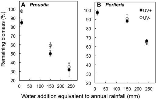 Remaining litter biomass (%) at the end of a 6-month decomposition experiment, preceded by photodegradation in the field. Samples from the field experiment are shown by open (UV+) or filled symbols (UV-). The laboratory experiment included irrigation treatments representing years with contrasting annual rainfall. Irrigation treatments represented the equivalent rainfall of a dry year (˜15 mm), an average year (140 mm) and wet (El Niño) year (240 mm) in semiarid Chile. The experiment was conducted under constant temperature (23°C). (A) Remaining litter biomass Proustia and (B)Porlieria. Data are means ± 1 SE.
