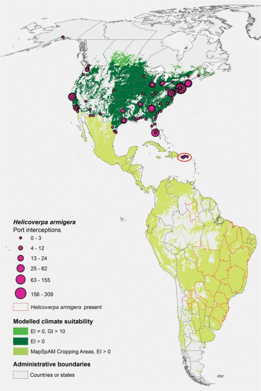 The invasion threats to North America by Helicoverpa armigera.South American locations known to be infested by H. armigera are indicated by red polygon outlines. Cropping areas in Central and South America suitable for establishment (EI positive under appropriate irrigation and natural rainfall scenarios) are indicated in pale green. In North America, areas suitable for establishment are indicated in dark green. Areas suitable for seasonal migration-based impacts are indicated in bright green.