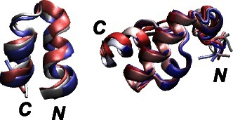 Superimposed 2KXA and 2KSL conformations. Superimposition of 2KXA and 2KSL conformations extracted from the SOM, as the ones displaying the minimum coordinates RMSD with respect to the first conformer of the corresponding PDB structures. The N and C terminal extremities are labeled, and the conformations, drawn in cartoon, are colored from blue to red, according to the conformational index.