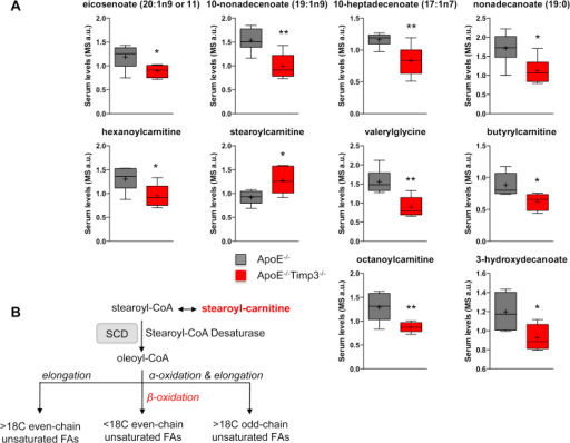 ApoE−/−TIMP3−/− mice have impairment of fatty acid metabolism. A) Metabolomics analysis of the serum shows a decrease in long-chain monounsaturated FFAs, medium-chain acyl-carnitines and medium-chain fatty acid markers in ApoE−/−TIMP3−/− animals (*p ≤ 0.05 and **p < 0.01, Student's t test, n = 6 per group). B) Regulation of MUFA/SUFA balance in mammalian cell lipids by SCD1.