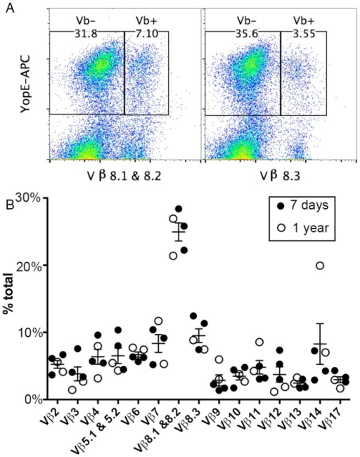 TCR Vβ subset distribution in ET cells.Splenocytes from C57BL/6 mice infected IV with Y. pseudotuberculosis mE for 7 days (A and filled circles in B) or one year (empty circles in B) were stained with YopE69-77 tetramer, a panel of Vβ antibodies and CD8 antibody conjugated with different fluorophores and were analyzed by flow cytometry. Representative histographs of tetramer (YopE-APC) and Vβ8.1 & 8.2 (left) or Vβ8.3 (right) signals from CD8+ T cells from one mouse are shown in (A). Numerical values correspond to percentages of gated cell populations among total CD8+ T cells. A summary of the percentages of each Vβ subset of total Vβ (% total) among ET cells from 3 mice infected for 7 days and 2 mice infected for 1 year is shown in (B). Mean and SEM is shown for each group of 5 mice.