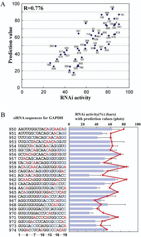 Prediction of siRNA activities for endogenous gene. (A) Scatter plot for 50 GAPDH–siRNA activities versus their prediction values. The correlation coefficient is 0.776 (P = 3.4 × 10−11). Number near the spot corresponds to the passenger strand 5′ end position of each siRNA in GAPDH mRNA. (B) Prediction of sequential siRNA activities for GAPDH. The nt sequences show the sense strand of GAPDH–siRNAs for positions 950–974. The color code for bases represent bases that have positive or negative effects on the activity as described in the legend of Figure 3B. siRNA activities (%) for GAPDH are shown in bars. The prediction value calculated for each siRNA is plotted in red.
