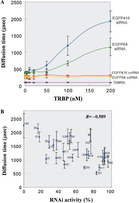 FCS measurement of binding affinity of TRBP against various siRNAs. (A) FCS analysis measured translational diffusion velocity of TRBP–siRNA complex passing through a confocal laser spot in a mixture. Human TRBP was titrated in a range of 0–200 nM. Concentration of TAMRA-labeled siRNA, ssRNA or free TAMRA is fixed to 1 nM. (B) Competition analysis using non-labeled siRNAs. Competitor siRNA activities versus diffusion times are plotted with error bars. Competitor siRNA sequences targeting EGFP mRNA start from nt positions 8, 25, 37, 50, 64, 99, 123, 166, 176, 242, 264, 299, 359, 371, 383, 416, 417, 418, 450, 476, 485, 532, 591, 617, 626, 662 and 701. Concentration of competitor siRNA and TAMRA-labeled EGFP 416 siRNA are 5 and 1 nM, respectively. TRBP is fixed to 150 nM. The correlation coefficient (R) is −0.589 (P = 1.2 × 10−3).
