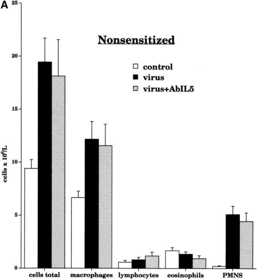 Airway leukocyte populations were measured in bronchoalveolar lavage after pretreatment with AbIL5 and AbMBP. In nonsensitized virus-infected animals (black bars, n = 10), pretreatment with AbIL5 (gray bars, n = 5) did not change any of the leukocyte numbers (A). In contrast, pretreatment of sensitized virus-infected animals with AbIL5 (gray bars, n = 8) significantly decreased the number of eosinophils compared with sensitized virus-infected alone (black bars; n = 16, P < 0.0001) (B). Pretreatment of sensitized virus-infected animals with AbMBP (dark gray bars, n = 7) caused a slight but statistically significantly decrease in eosinophil numbers compared with sensitized virus-infected animals alone (black bars; n = 16, P = 0.04). In both AbIL5- and AbMBP-pretreated animals, neutrophil cell numbers were unaltered. Total leukocyte numbers were significantly decreased in sensitized virus-infected animals treated with AbIL5 (light gray bar) compared with sensitized virus-infected animals alone (black bar, P = 0.0025). Data are expressed as the means of total cells recovered by lavage. Each point is the mean, with SEM shown by vertical bars.