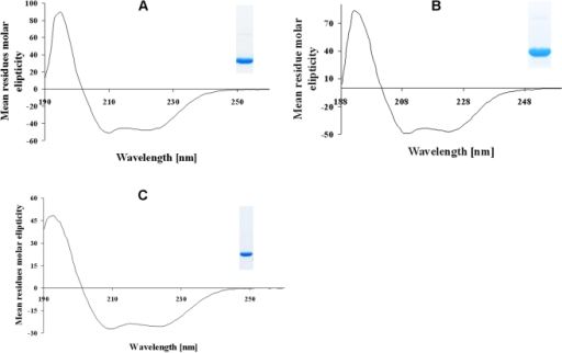 Circular dichroism (CD) spectroscopy of the recombinant proteins.(A–C), Far-UV CD spectra of NBD94444–547 (A), NBD94566–663 (B) as well as NBD94674–793 (C), respectively. The SDS-gel in the insets show a sample of the corresponding purified constructs NBD94444–547, NBD94566–663 and NBD94674–793.