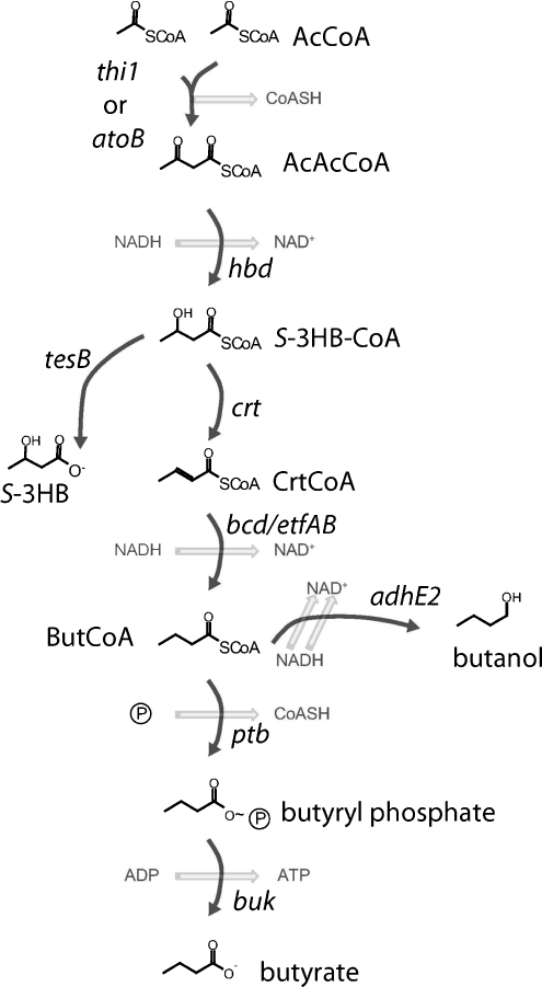reactions of butanols with hydrbromic acid Reactions of butanols with hydrbromic acid essay sample in this experiment, 1-butanol or 2-butanol will be converted to the corresponding alkyl bromide with hbr, while using sulfuric acid as a catalyst.