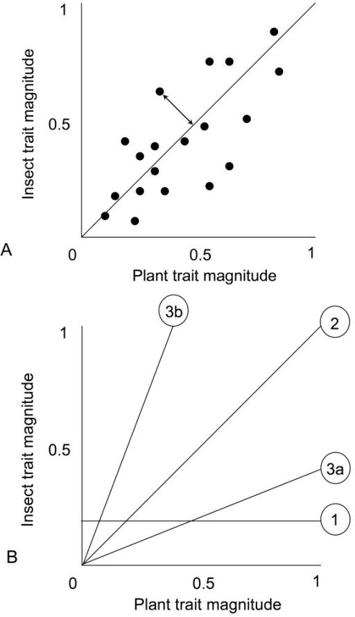 Hypothetical outcomes of trait-matching studies. Figure 1A. Geographic variability in the strengths of directional selection may weaken a regression (i.e. increase variability) by increasing the frequency and magnitude of trait mismatches (where a trait mismatch is indicated by a double headed arrow). However, this may not affect the slope of the relationship which indicates the predictability of the direction of the trait mismatches in relation to trait magnitude. Figure 1B. The slope of the trait regression relationship may reveal one of three possible scenarios: Slope 1, where insect and plant traits are not matched, slope 2, where trait matching scales with trait magnitude to produce a slope of 1 and slopes 3a and b where there is a consistent and predictable mismatch of traits where the mismatch is contingent on trait magnitude. For example, in slope 3a the plants have predictably longer traits than the insects and the mismatch between the taxa should become greater with trait magnitude.