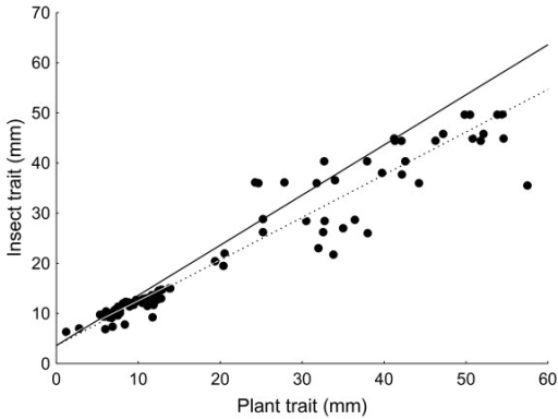 Plant-insect trait-matching at the population level. Scatter plot showing population means for insect and plant morphological traits from all the studies in Table 1 (excluding autonomous selfing plants). Solid line: slope of unity (intercept assumed to be the same as the value derived from the RMA regression intercept: 3.61); Stippled line: RMA derived slope through all data (slope: 0.851 ± 0.026; t90 = 5.7242, p < 0.0001).