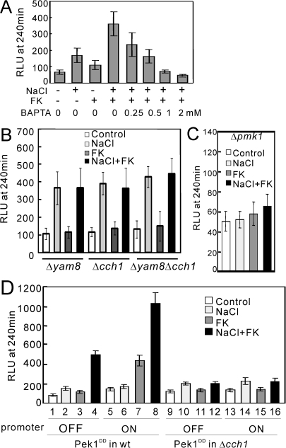 "NaCl plus FK506 caused a synergistic cytoplasmic Ca2+ increase via the Cch1-Yam8 channel complex.(A) The synergistic increase in the cytoplasmic Ca2+ level is derived from the extracellular medium. The experiment was performed as described in Figure 4, except that prior to the addition of FK506, various concentrations of BAPTA (0.25, 0.5, 1, and 2 mM) were added to chelate Ca2+ in the EMM medium. The histogram was calculated as described in the legend of Figure 4. (B) The cch1 and yam8 deletion abolished the synergistic increase in the cytoplasmic Ca2+ level. The Δyam8, Δcch1, or Δyam8Δcch1 cells harboring pKB6892 were cultured and assayed as described in Figure 4. The histogram was calculated as described in the legend of Figure 4. (C) The pmk1 deletion abolished the synergistic increase in the cytoplasmic Ca2+ level. The Δpmk1 cells harboring pKB6892 were cultured and assayed as described in Figure 4. The histogram was calculated as described in the legend of Figure 4. (D) Overexpression of the constitutively active Pek1 MAPKK stimulates the Cch1-Yam8-mediated Ca2+ influx. The wild-type or Δcch1 cells integrated with chromosomal pREP1-GST-Pek1DD were transformed with pKB6892, and the transformants were cultured in EMM containing 4 µM thiamine for 12 hours. Then the cells were collected and washed three times with EMM without thiamine. The washed cells were divided into two portions, one portion was cultured in EMM containing 4 µM thiamine, and the other portion was cultured in EMM without thiamine, and the cells were grown to exponential phase. The cytoplasmic Ca2+ level was monitored as described in Figure 4. ""Promoter OFF"" indicates that the expression of Pek1DD was repressed by the addition of 4 µM thiamine to the medium and ""Promoter ON"" indicates that the expression of Pek1DD was induced by the removal of thiamine from the medium. The histogram was calculated as described in the legend of Figure 4. The data represent the means ± standard deviations of RLU taken at 240 min from three independent experiments, and each sample was analyzed in duplicate."
