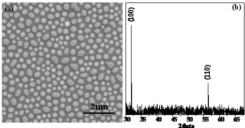 The feature and structure of the prepared sample. SEM image (a) and corresponding XRD pattern (b) of the fabricated ZnO nanoparticle array.