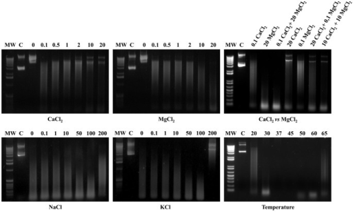 Effects of Ca2+, Mg2+, combined Ca2++Mg2+, ionic strength, and temperature on MAG_5040 nuclease activity.The nuclease activity and stability under different tested conditions were evaluated by loading on a 1% agarose gel approximately 10 µl of each of the endpoint reactions. The far left lane of each panel was loaded with the molecular weight marker (MW). Both 1 Kb (left and central panels) and 1 Kb Plus (top and bottom right panels) DNA ladders were used (Invitrogen). In each panel, lanes designated C were loaded with untreated plasmid DNA in agarose loading buffer. Concentrations expressed in mM and temperatures in °C are indicated in the appropriate panels (Ca2+, top left panel; Mg2+, top middle panel; combined Ca2++Mg2+, top right panel; ionic strength, bottom left and middle panels; and temperature, bottom right panel).