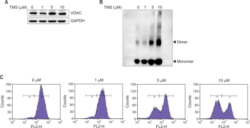 TMS induces VDAC1 expression and oligomerization. (A) Western blot analysis. MCF-7 cells were treated with various concentrations of TMS (0, 1, 5, or 10 μM) for 48 h. After incubation, cells were harvested and extracted proteins were resolved by SDS-PAGE (10%) and Western blot analysis was conducted. GAPDH level was determined as loading controls. (B) VDAC oligomerization. Cells were treated with TMS (0, 1, 5, or 10 μM) for 48 h. Cells were then harvested and incubated with sulfo-EGS (250 μM) for 20 min at 30°C. After proteins were resolved by SDS-PAGE (8%), VDAC1 proteins were measured using Western blot analysis. A 33-kDa band represents VDAC monomers, while a 65-kDa band represents VDAC dimers. (C) Mitochondrial membrane potential. After cells were incubated with TMS for 48 h, cells were labeled with 100 nM TMRM for 20 min. After washing, cells were analyzed by flow cytometry. TMRM was monitored as log FL2-H (x axis, 574 nM) versus relative cell number (y axis) in the histogram. The data shown are representative of three independent experiments.