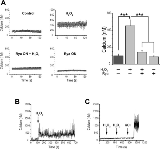 Incubation with exogenous H2O2 increases [Ca2+]i in pancreatic β-cells via activation of RyR-mediated Ca2+ release.(A) Records of [Ca2+]i vs time obtained from rat pancreatic β-cells pre-incubated for 1 h with 2 μM fura-2-AM in Hanks basal solution (2.8 mM glucose). Control: cells were kept in basal Hanks solution. H2O2: cells were pre-incubated for 1 h with 100 μM H2O2 in basal Hanks solution. H2O2 + Rya ON: cells were pre-incubated with 200 μM ryanodine (Rya) for 12 h and were then incubated for 1 h with 100 μM H2O2 (in ryanodine-free solution) prior to recording in basal Hanks solution (H2O2 free). Rya ON: cells were pre-incubated with 200 μM ryanodine for 12 h. At right, quantification of these results, given as Mean ± SEM, N = 3–7. Statistical significance was determined with one-way ANOVA followed by Tukey multiple comparison test. ***: p <0.001. (B) Average record (N = 3) of Ca2+ signals elicited by 100 μM H2O2 in the absence of ryanodine. (C) Average record (N = 3) of Ca2+ signals registered in cells pre-incubated with 200 μM ryanodine for 12 h (Rya ON); 100 μM H2O2 or 90 mM KCl were added in succession, as indicated by the arrows.