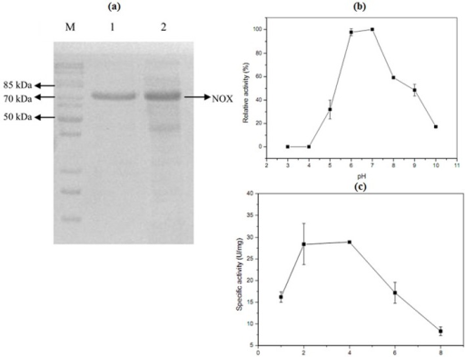 Characterization of the NOX and SDS-PAGE analysis of the purified NOX.(a) 10% SDS-PAGE analysis of the purification NOX. Lane M: protein marker; Lane 1: purified NOX with His-tag; Lane 2: recombinant bacterium (harboring pET-32a-nox) induced by IPTG. (b) Optimal pH for NOX. (c) The optimal inducing time of NOX.
