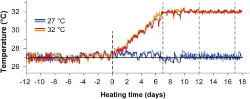 Temperature logger data for the experimental period.Thermal log of the four temperature sensors placed in heated (32°C) and control (27°C) seawater aquarium tanks for the duration of the experimental period. Two temperature sensors were used per treatment. Dashed lines indicate sampling time points.